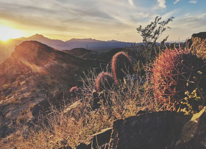 ahwatukee Arizona Phoenix South mountain preserve Estrella mountains Rock hoodoo barrel cactus sunset contrail EyeEm Best Shots EyeEmNewHere EyeEm Nature Lover EyeEm Selects EyeEm Gallery Eye4photography  EyeEm EyeEmBestPics EyeEm Best Edits Sonoran Desert Sun Arizona Sun Beams Lens Flare Sunset_collection Sun Burst Sunset #sun #clouds #skylovers #sky #nature #beautifulinnature #naturalbeauty #photography #landscape Sunsets Sunlight Flower Head Mountain Sunset Flower Rural Scene Agriculture Sky Landscape Cloud - Sky Plant Wildflower