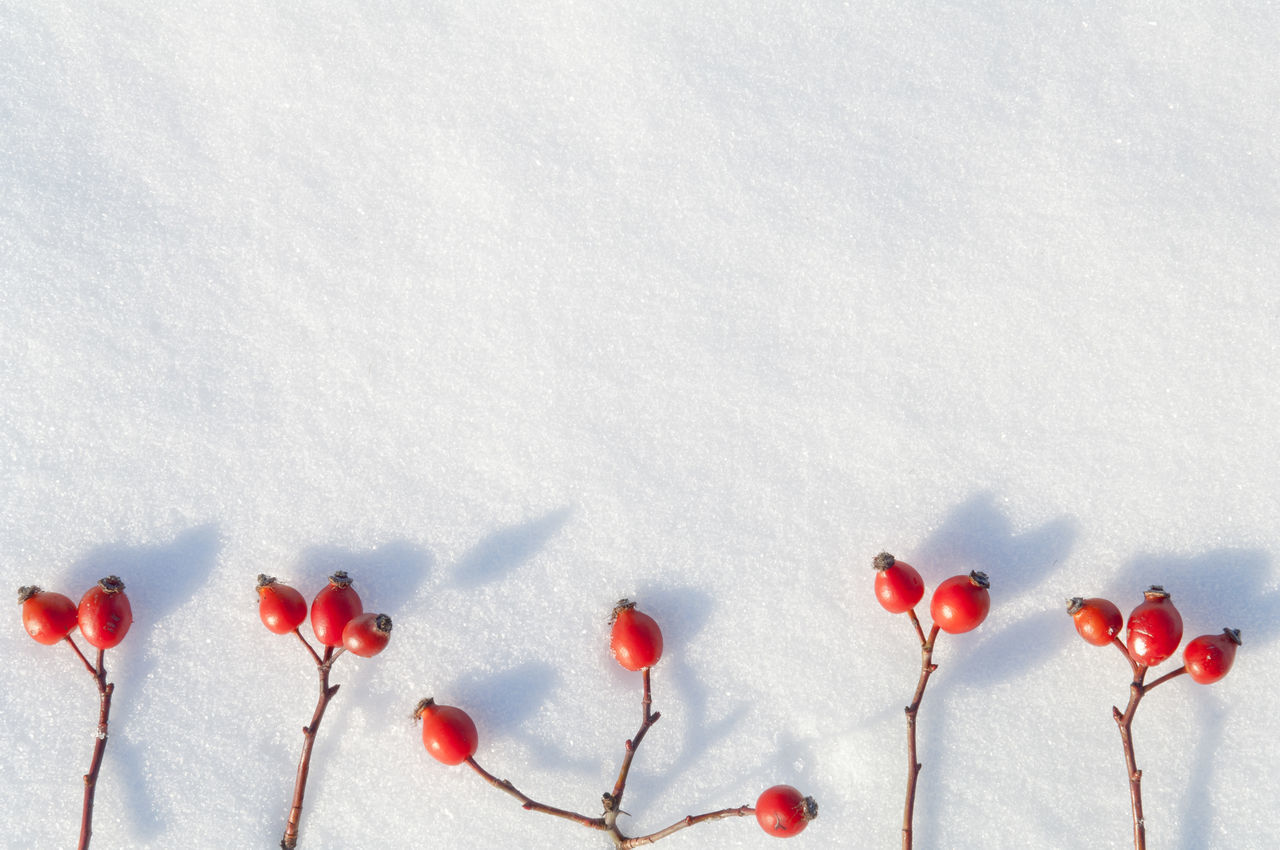 heart shape, red, love, romance, valentine's day - holiday, nature, no people, day, winter, beauty in nature, outdoors, close-up, snow, freshness