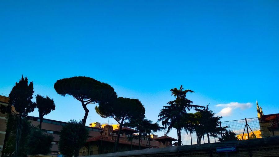 Tree City Blue
