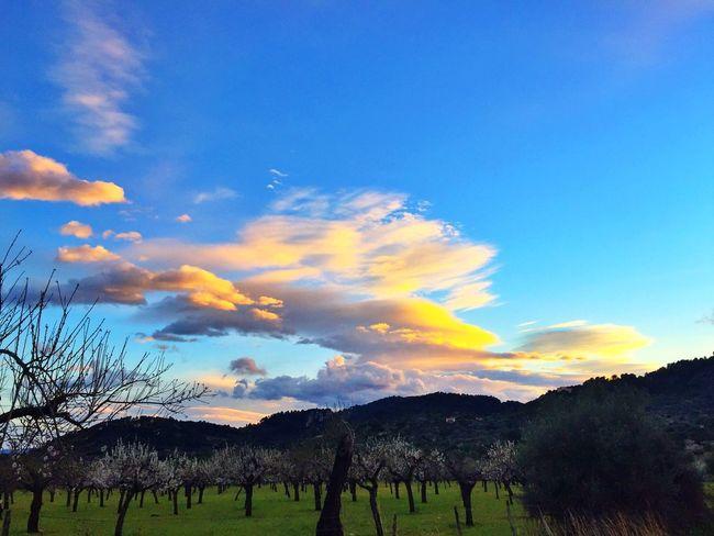 Landscape Mallorca Mancordelavall Hello World Enjoying Life
