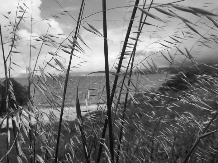 Grass Nature No