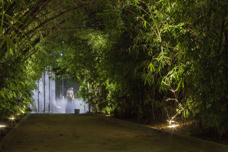 Bamboo Fountain Garcia Sanabria Green Light Night Park Santa Cruz De Tenerife Telemacox
