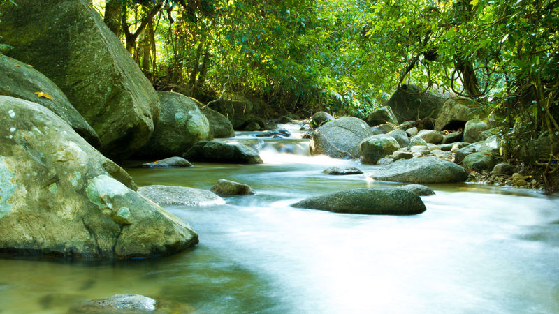 smooth flow ASIA Green Perak Taiping Beauty In Nature Day Forest Leaves Malaysia Nature No People Outdoors Rock - Object Rocks And Water Scenics Tranquil Scene Tranquility Tree Water Waterfall