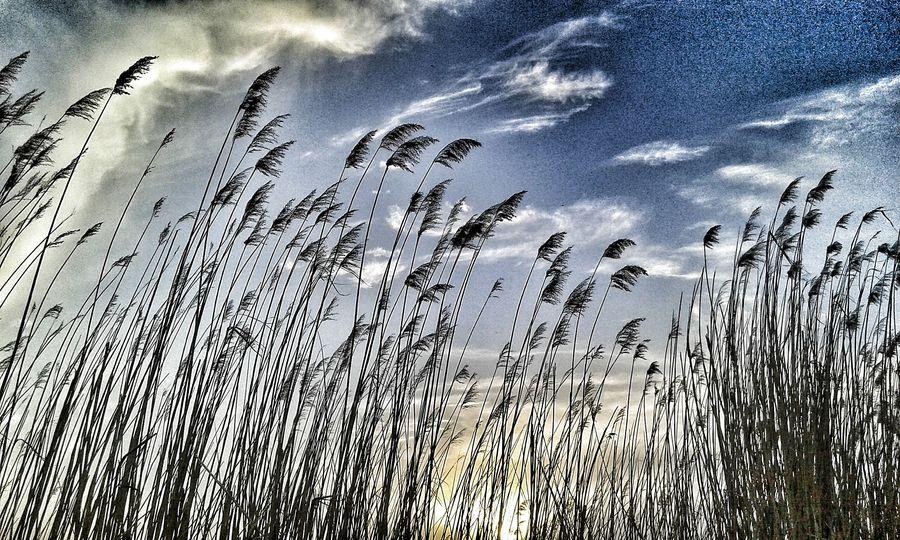 Lilia Hello World Taking Photos Relaxing Clouds And Sky Colors Clouds Freedom My Photo Bulutlar Doğa Blue And White Blue Sky Blue Gökyüzü❄⛄🎑 Turkey Ankara Sky Nature Gölbaşı Gölbaşı -Mogan Gölü