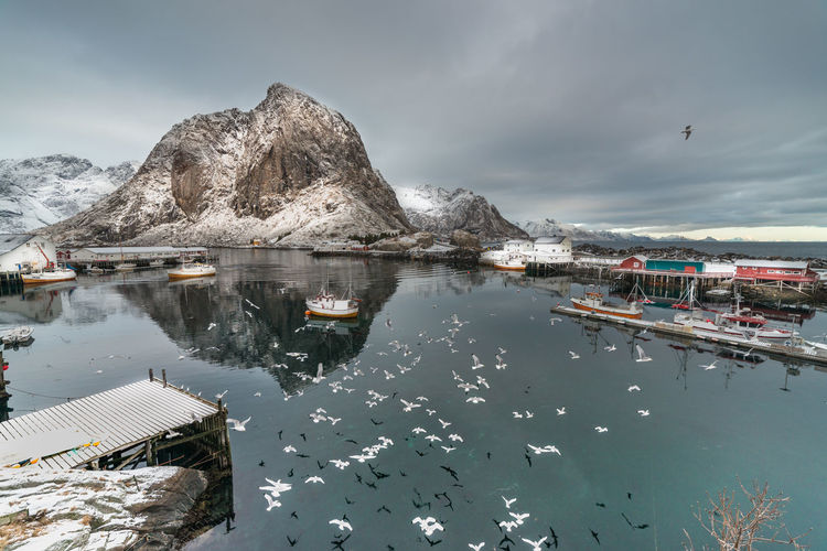 Birds flying by fishing village of Hamnøy ( Hamnoy ) near the town of Reine in Lofoten area of Norway. Archipelago Calm Fishing Village Norway Reflection Reine Serenity Travel Arctic Arctic Circle Birds Boats Clouds Dock Fishing Boat Flying Hamnøy Lofoten Mountain No People Scenics Sea Seagull Snow Village