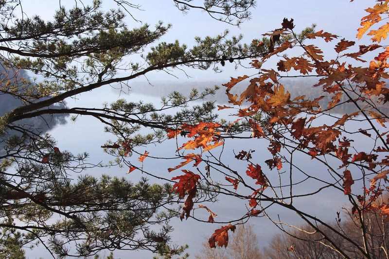 Tree Branch Nature Low Angle View Beauty In Nature Growth No People Day Outdoors Sky Autumn Leaf