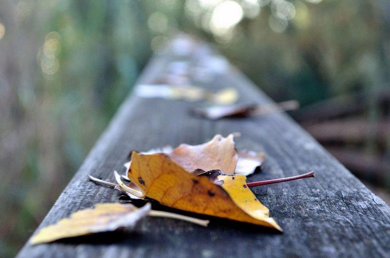 Close-up of maple leaf on footpath