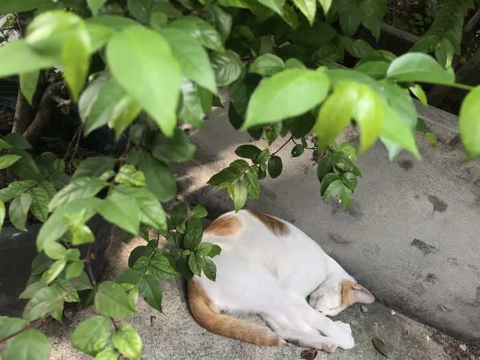 View of a dog relaxing on plant