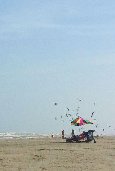 Capturing Freedom Birds In Flight Seagulls The Beach Life At The Beach Vacation Summertime Summer ☀ Sea Summer2015