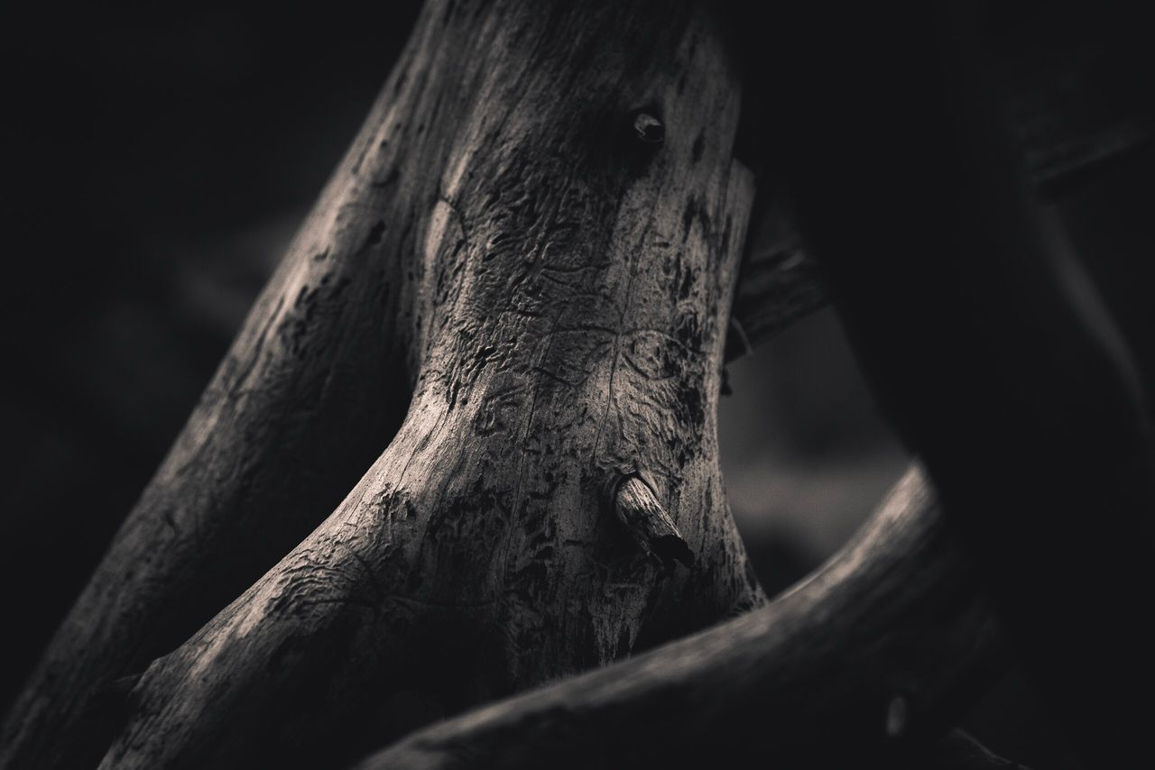 one animal, animal themes, tree trunk, no people, animals in the wild, tree, close-up, wood - material, animal wildlife, day, nature, branch, outdoors, mammal