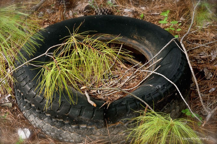 Beauty In Nature Close-up Field Grass Nature Outdoors Tires