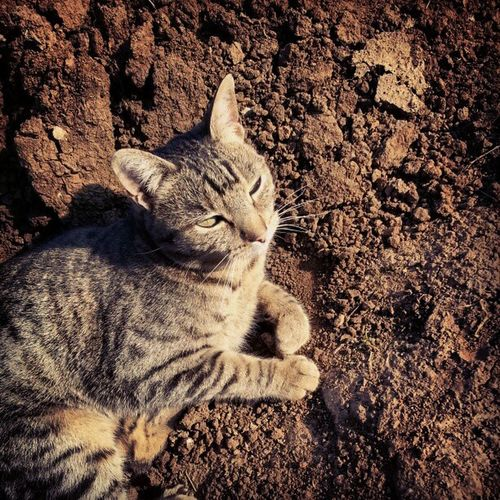Country cat. Mynameissleepy