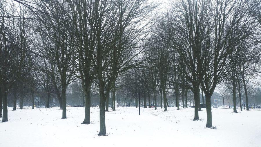 Winter Black and White Polar Climate Sky Deep Snow
