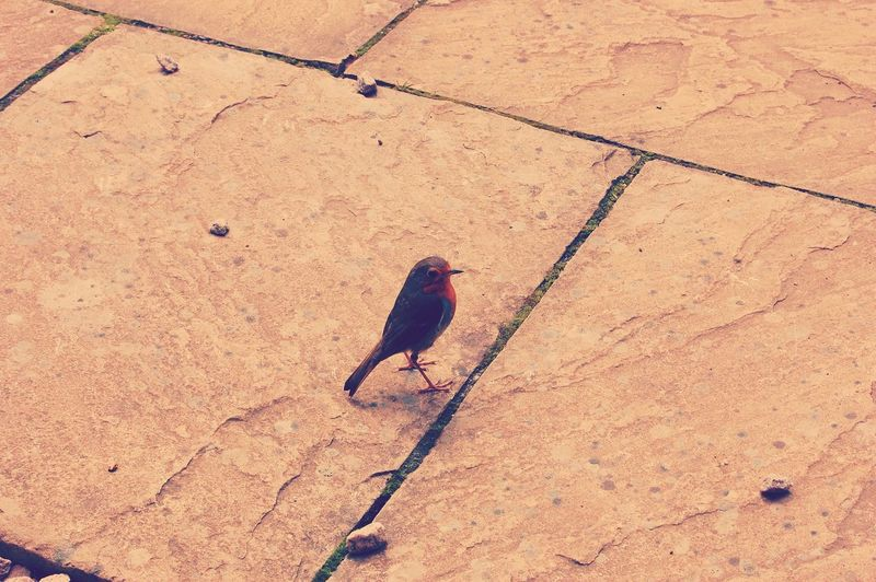 High angle view of bird perching on sand