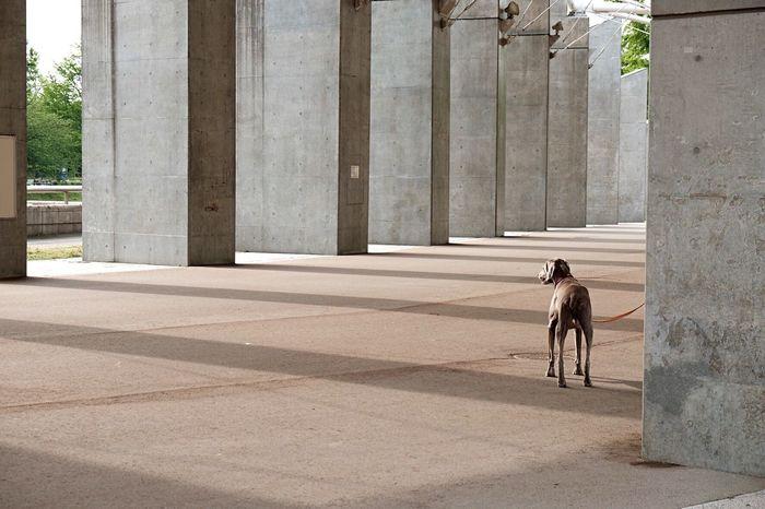 Niigata-shi Japan Park EyeEm Gallery Dog Dogs Of EyeEm Dogslife Dog Walking Dog Film Film Photography