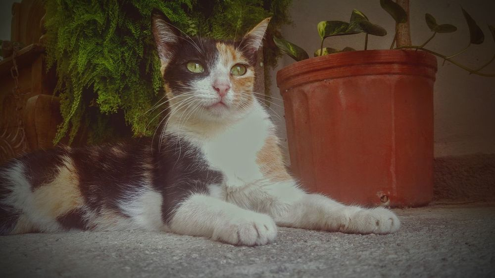 Cute Cat Cat♡ Pets Photography Editphotos Domestic Cat Pets One Animal