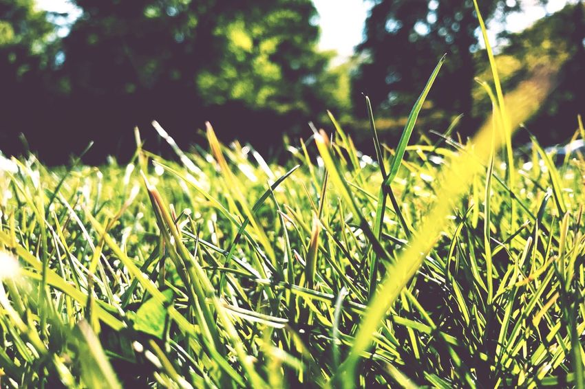 Sommergefühle On the Green Grass Growth Nature Beauty In Nature No People Outdoors Day Close-up EyeEm Nature Lover From My Point Of View Relaxing Meadow Park Summer Summer Views Backgrounds Breathing Space Lost In The Landscape Perspectives On Nature