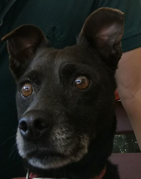Fgugal Pets Domestic Animals Dog Animal Themes