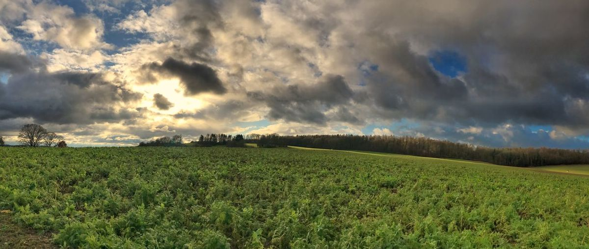 Panoramic shot of field against sky