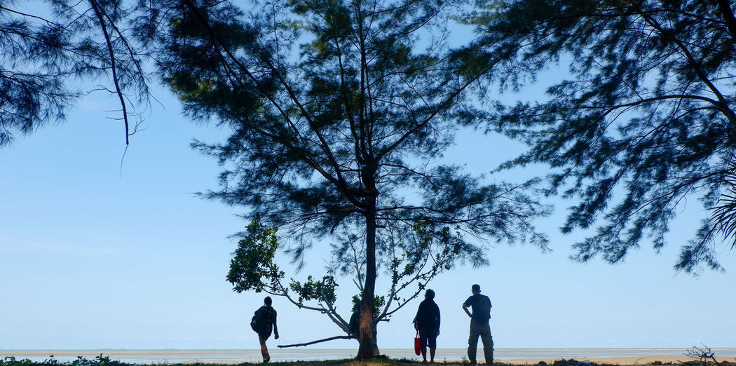 Rear view of people walking on street amidst trees against sky