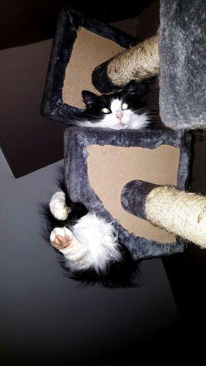 Taz Cat Eyes Pet Dopey Cat Human Hand Black Background Close-up