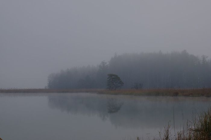 Fog Tranquility Tranquil Scene Beauty In Nature Water Lake Tree Scenics - Nature Reflection Plant Idyllic Nature Cold Temperature Outdoors Hazy