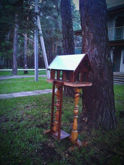 Secret Garden First Eyeem Photosquirrels feeder