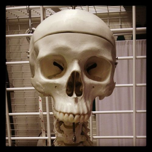 Where is your Mandible ? Skeleton @anatomy Ugul