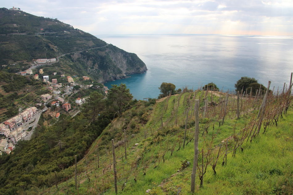 5 Terre 5 Terre Italia Agriculture Beauty In Nature Coastline Cultures Day Horizon Over Water Landscape Mountain Nature Riomaggiore Scenics Sea Travel Destinations Vacations Vigneti Sciacchetra' Vineyard Wine Moments Wine Moments Slow Travel Slow Tourism Perspectives On Nature