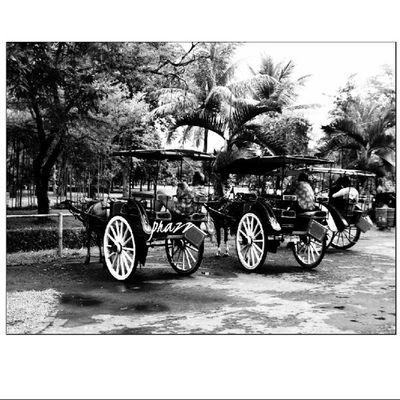 Delman/Andong, moda transportasi tradisional yg mulai jarang ditemukan l @@indosat Super6GB IndosatSPF2103 IndonesianHeritageSeries Proudofindonesia