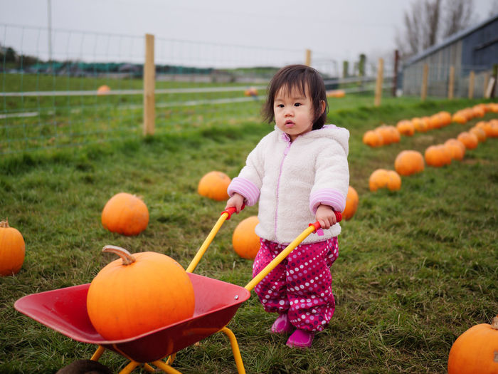 Cute baby girl with pumpkins at lawn