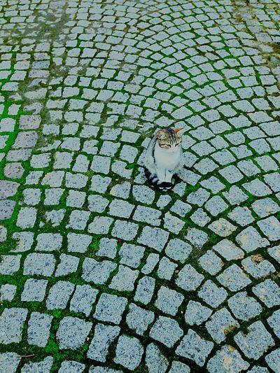 Cat Streetphotography Eye Em Around The World Hello World Traveling Enjoying Life Relaxing City Tomb Historical Building