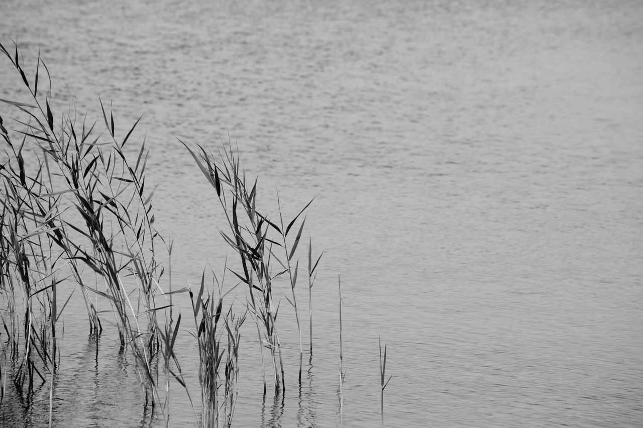 water, nature, lake, tranquil scene, tranquility, outdoors, no people, day, rippled, grass, beauty in nature, close-up