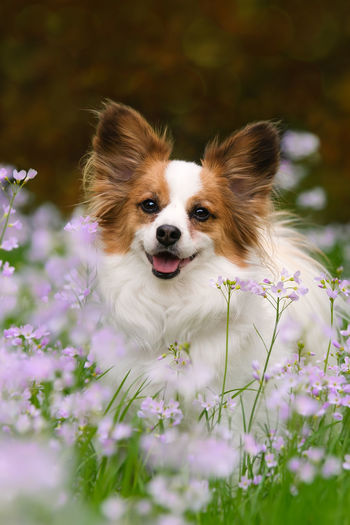 Close-up of dog with flowers