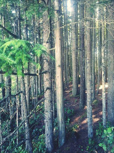 Sticks Trees