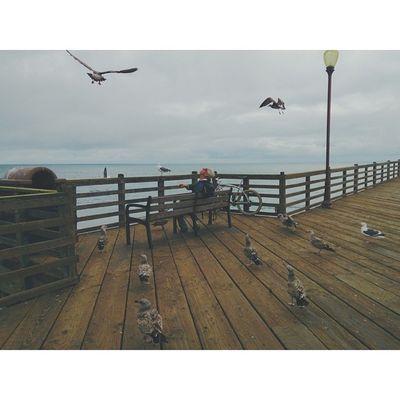 DTShots. Downtown Pier Beach Seaguls HungryVscoCamVscoPotdbeachVisualsHaveARadDay