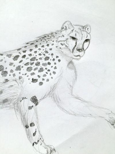 Draw Drawing Art, Drawing, Creativity Drawings Work In Progress Cheetah
