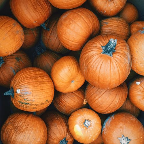 Pumpkins Orange Pumpkin Pumpkins EyeEm Selects Full Frame Healthy Eating Backgrounds Large Group Of Objects Wellbeing Freshness Abundance No People Orange Color Still Life High Angle View Close-up Day Stack