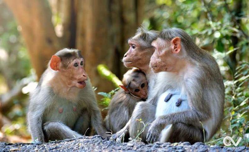 family pic... Monkeys Monkey Monkey Forest Family❤ Animal Photography Animals Animal_collection Feeling Safe