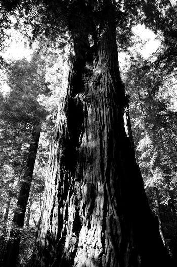 Great national park... I couldn't believe how old those trees are EyeEm Best Shots - Black + White EyeEm Best Shots Nature_collection Nature EyeEm Nature Lover Stand Out From The Crowd Hugging A Tree