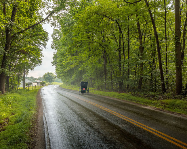 Amish Buggy Amishcountry Amish Dividing Line Road Trip Outdoors Diminishing Perspective Growth Land Vehicle Marking Road Marking Forest Day Green Color No People Land Sign Nature Mode Of Transportation Direction The Way Forward Plant Road Tree Transportation