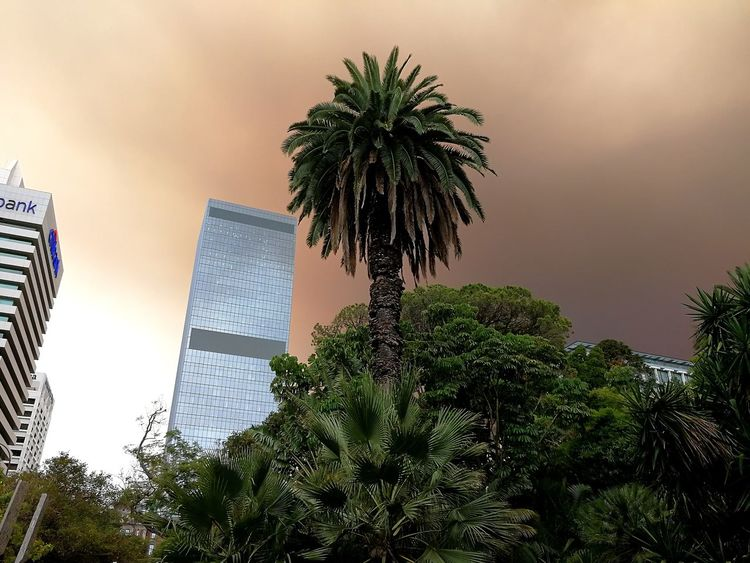 Gazisonit Perth Palm Palm Trees Bush Fire Smoke Towerblock Tree Low Angle View No People Growth Day Outdoors Nature Sky Palm Tree Architecture Tall - High Building Exterior Built Structure Skyscraper Tower City Tall Beauty In Nature An Eye For Travel The Graphic City