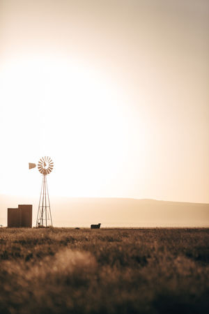 Rustic Sunset_collection Texas Texas Skies Windmill Agriculture Beauty In Nature Clear Sky Cow Pasture Cows Day Dusty Field Fuel And Power Generation Growth Landscape Nature Outdoors Renewable Energy Rural Scene Scenics Sky Sunset Wind Power Windmill