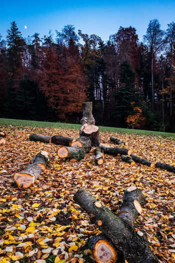 Tree Autumn Nature Plant Plant Part Change Leaf Tranquility Day No People Land Solid Beauty In Nature Falling Stack Outdoors Sky Rock Tranquil Scene Forest Fall Leaves