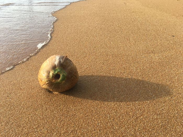 High angle view of fruit on sand at beach
