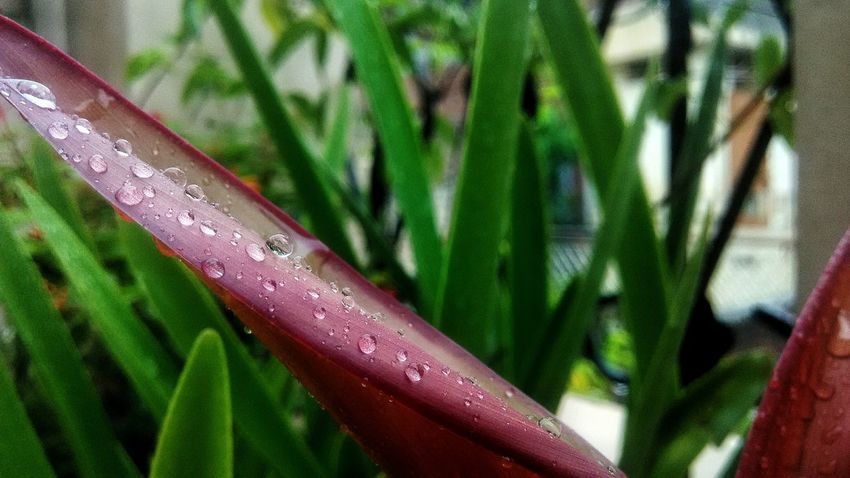 Green Color Growth Leaf Nature Plant Close-up No People Focus On Foreground Day Drop Freshness Outdoors Beauty In Nature Fragility Water Grass