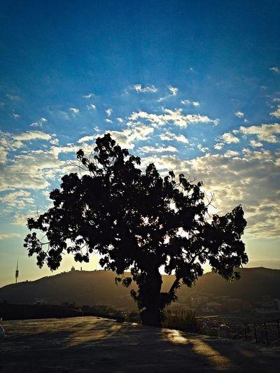 Watching the sunset over Barcelona Barcelona Guinardo Parcdelguinardo Sunset Tree Silhouette