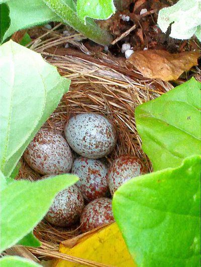 Eegs Plants Bird First Eyeem Photo