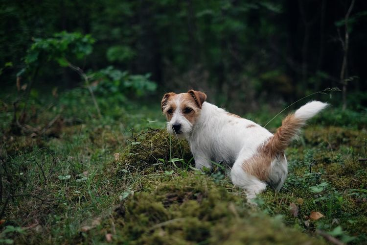 Dog outdoors in the forest
