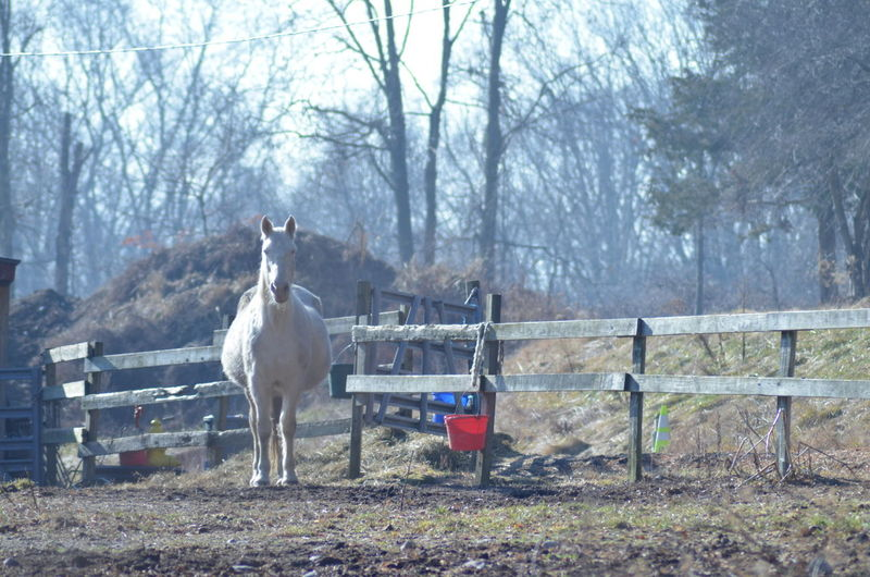 Farm Life Horse Horse Photography  Livestock No People One Animal Outdoors Winter Horses Break The Mold